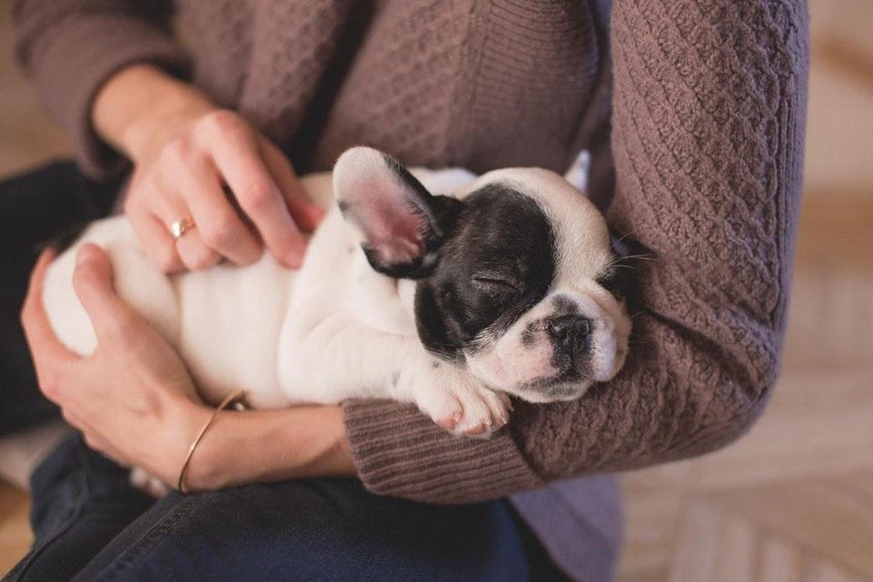 blog-2017-pup